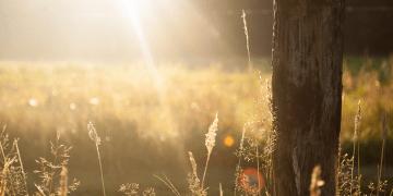 Lampa TDP – Uzdrawiająca moc ziemi isłońca